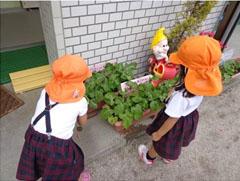 自分たちで育てる野菜